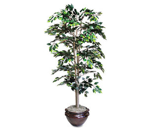 Nu-Dell Manufacturing Company, Inc T7781 Artificial Ficus Tree, 6-ft. Overall Height by NU-DELL MANUFACTURING