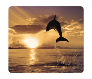 Fellowes, Inc FEL5913401 Recycled Mouse Pad, Nonskid Base, 7 1/2 x 9, Dolphin by FELLOWES MFG. CO.