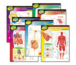 TREND ENTERPRISES, INC. T38913 Learning Chart Combo Pack, The Human Body, 17w x 22h, 7/Pack by TREND ENTERPRISES, INC.